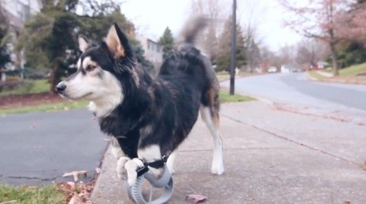 3D-Printed Canine Prostheses