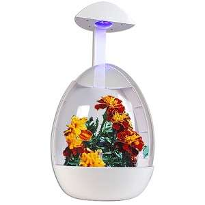 Desktop Garden USB Powered Greenhouse