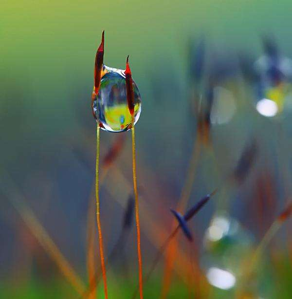 Dazzling Dew Photography