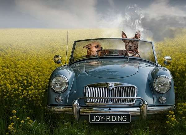 Adventurous Pup Photography