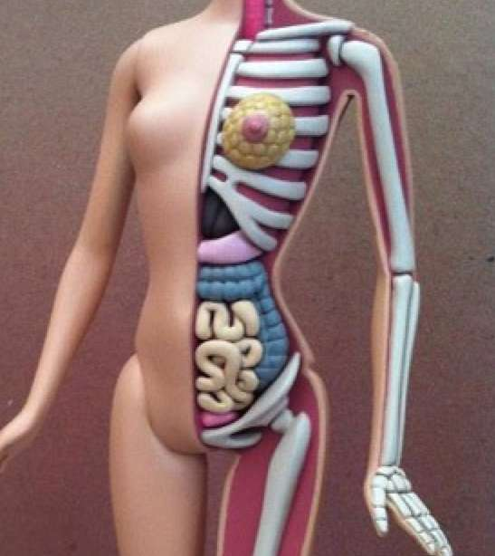 Dissecting Barbie