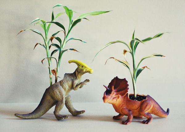 Prehistoric Plant Accessories