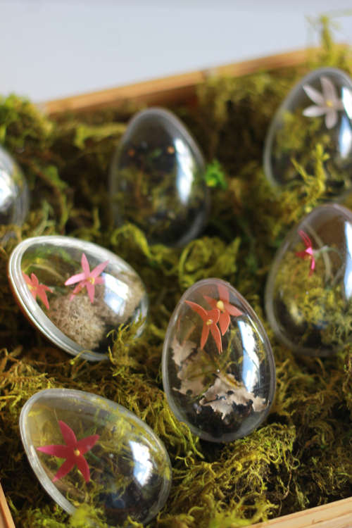 Egg-Shaped Terrariums