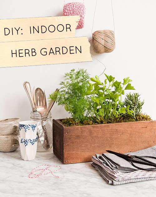 Homemade Herbivore Gardens Diy Indoor Herb Garden