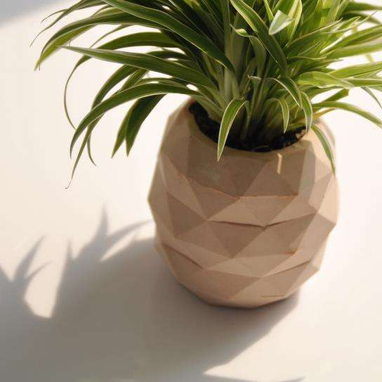 Diy pineapple plant holders diy plant for How to plant a pineapple top in a pot