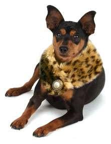 Canine Fashion Stoles