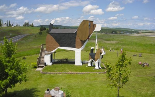 Canine-Shaped Accommodations