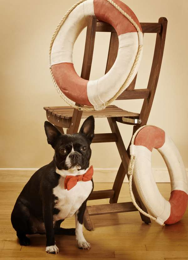 Formalwear For Dogs