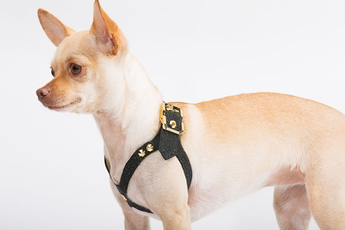 Diamond-Encrusted Dog Harnesses