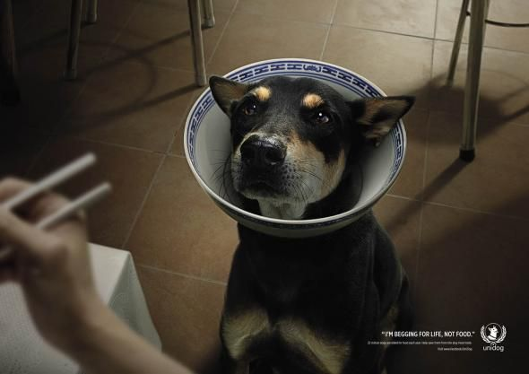Domestic Pet Meat Ads