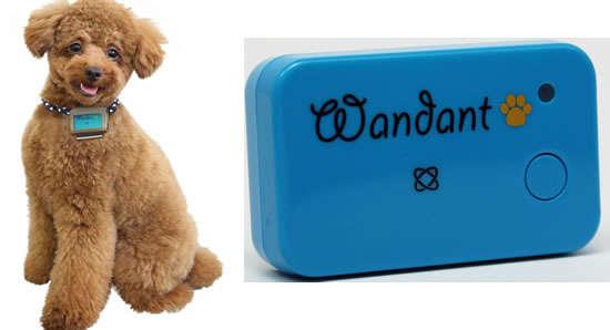 Canine Obesity Monitors