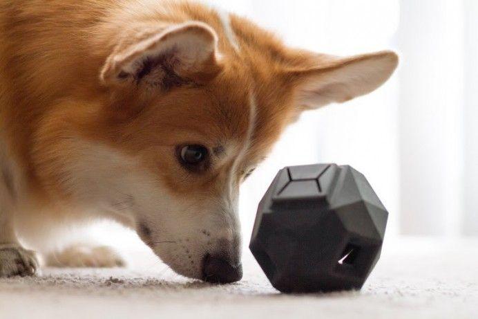 Rewarding Dog Toys
