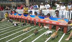 Dog Racing Unleashed
