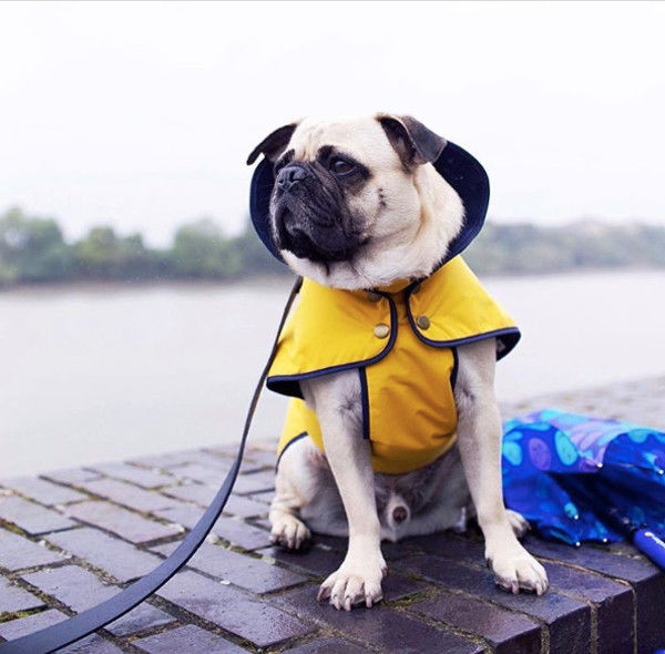Stylish Dog Raincoats
