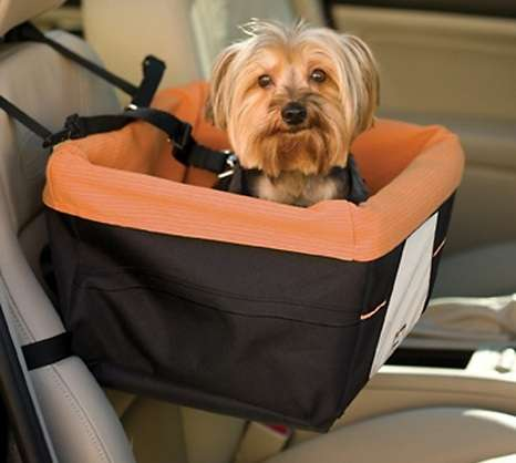 Buckled Puppy Booster Chairs