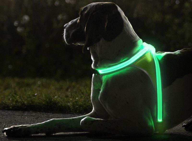 Illuminating Dog Vests