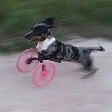 3D-Printed Dog Wheelchairs