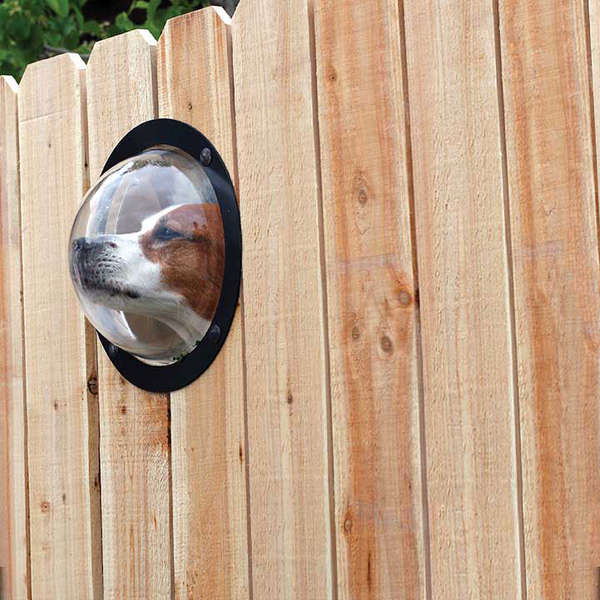 dog window