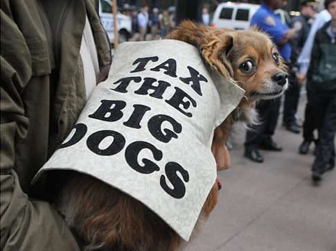 Dogs of Occupy Wall Street