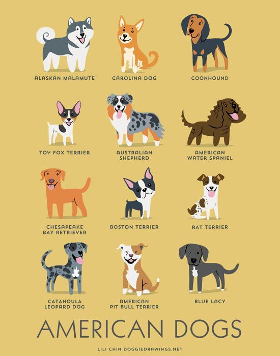 Illustrated Dog Breed Charts