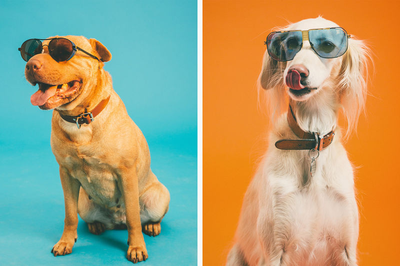 Summery Pooch Portraits