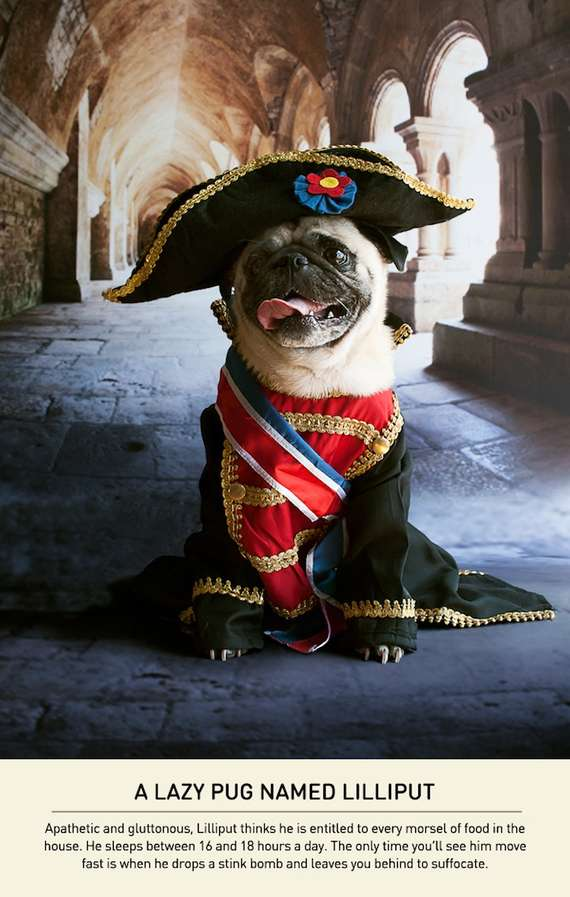 Dogs With a Napoleon Complex