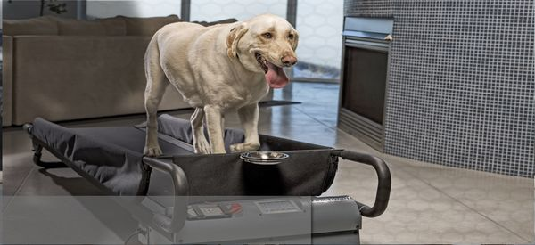 Canine Fitness Treadmills Dogtread Treadmill