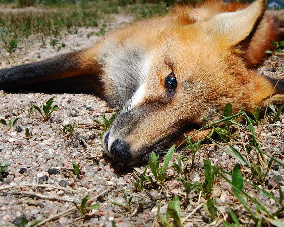 Poignant Dead Animal Photography