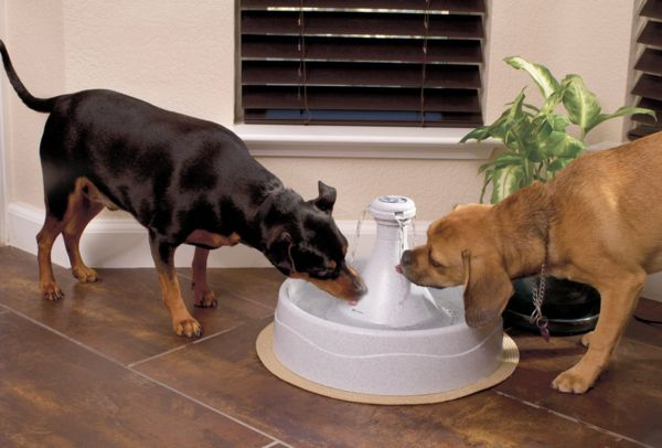 Sophisticated Animal Water Fountains