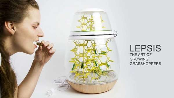 Edible Bug Breeding Terrariums