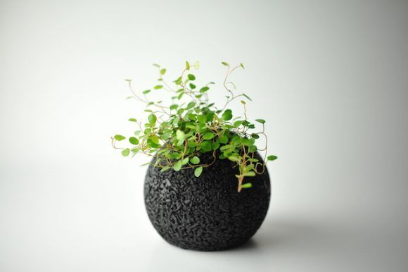 Air-Purifying Planters