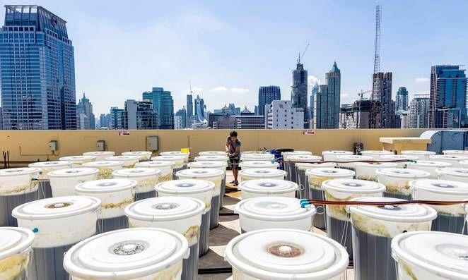 Rooftop Spirulina Farms