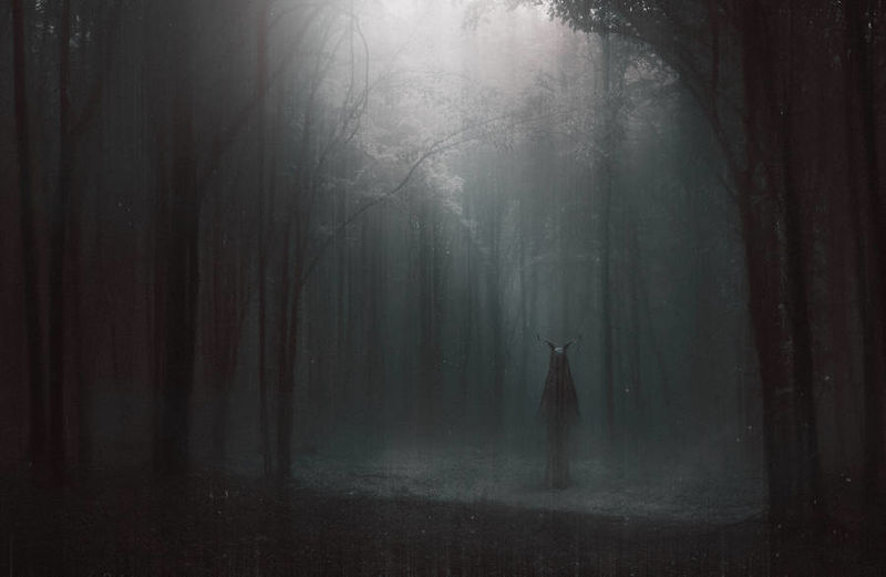 Eerie Woodland Photography : eerie photo
