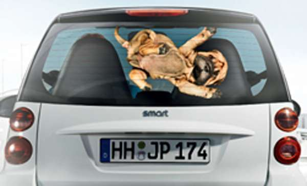electric car,evonik, dogs, campaigns