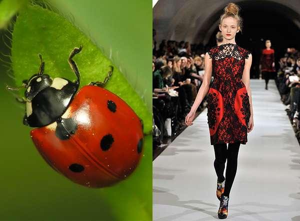 Ladybug Lace
