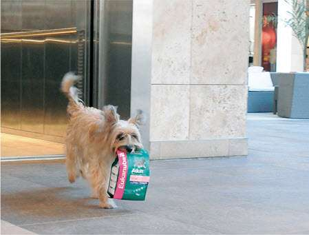 Shopping Dogs to Sell Pet Food