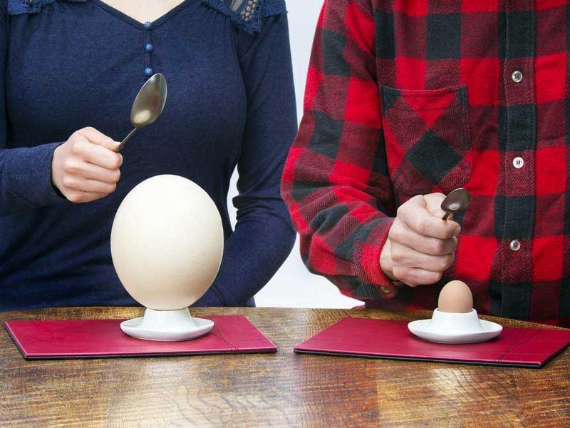 Exotic Egg Menus