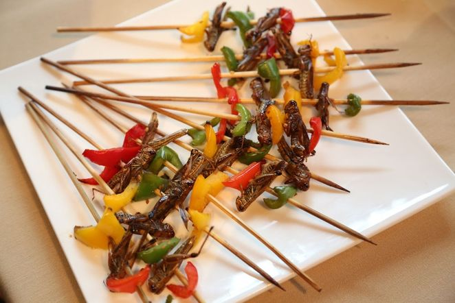 Gourmet Insect Appetizers