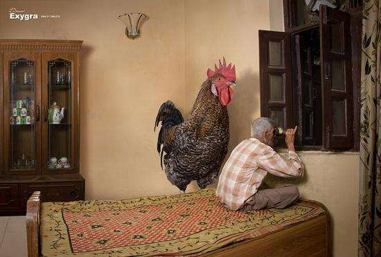 Peeping Rooster Ads