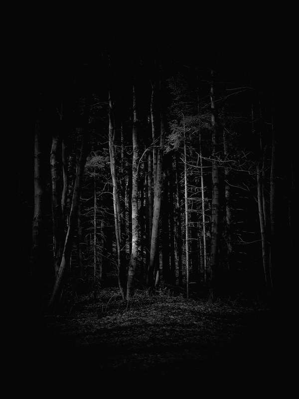 Freaky Forest Photography
