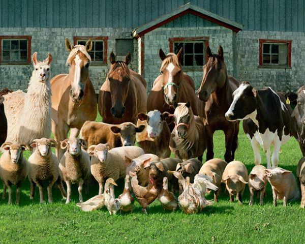 Animalistic Family Portraits