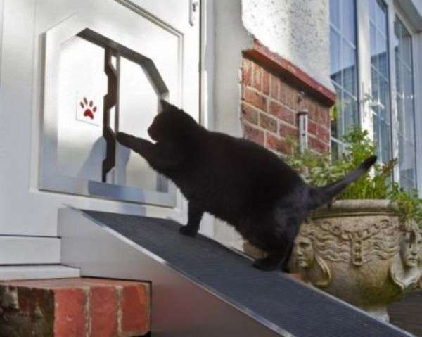 Fat Cat Flap