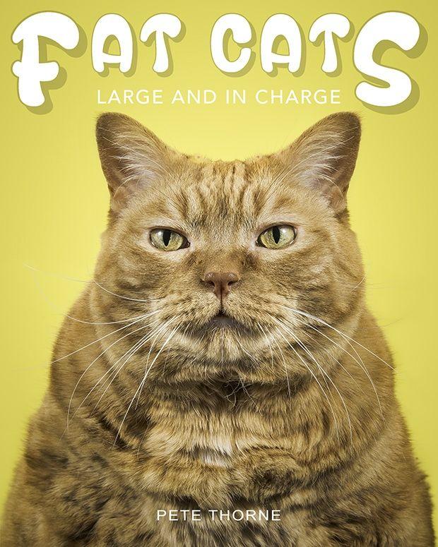 Fat Feline Photography