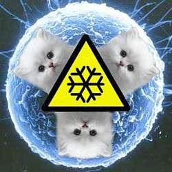 Felines From Frozen Eggs