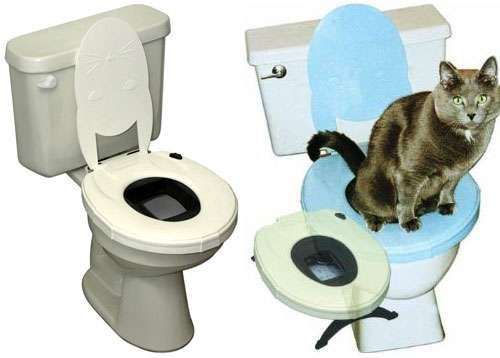 Toilet Training Litters