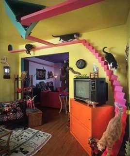 Feline Interior Design