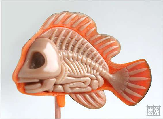Cartoon Fish Anatomy