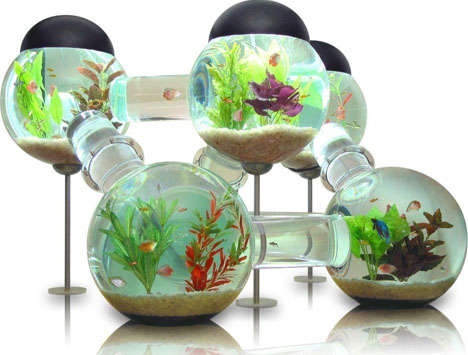 Maze-Like Fish Aquariums