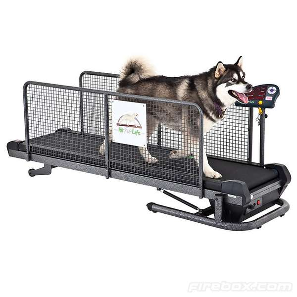 Fit Fur Life Treadmill