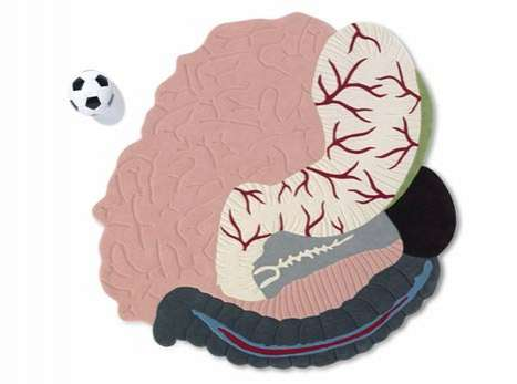 Educational Anatomical Rugs